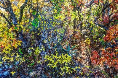 Luther Smith, 'Lake Worth, Texas, Fall', 2014