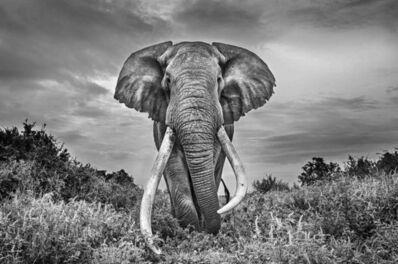 Michel Ghatan, 'Gentle Giant', Tawi, Kenya, 2020