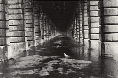 Edouard Boubat, 'Pigeon, Paris', 1981/1981