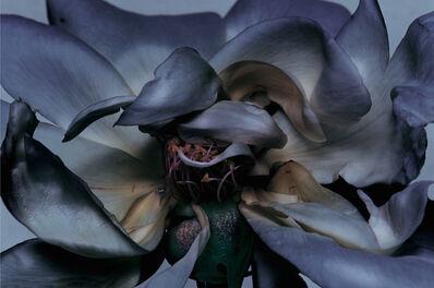 Nick Knight, 'Rose', 2000