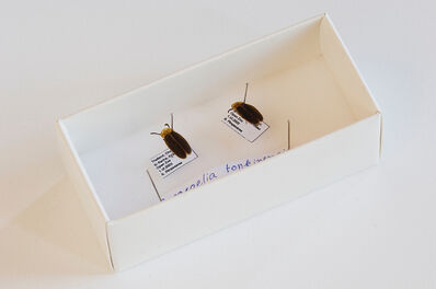 Arin Rungjang, 'Bones, Books, Artificial Lights and Fireflies', 2015