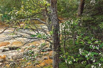 Jeffrey Vaughn, 'Flowering Dogwood Rocky Stream', 2012