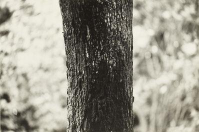 Koji Enokura, 'P. W. – No.70', 1983