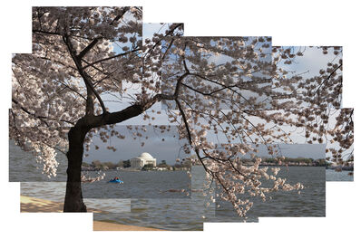 Jason Horowitz, 'Cherry Blossoms, Tidal Basin', ca. 2004