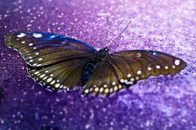 David Drebin, 'Fragile Beauty', 2014