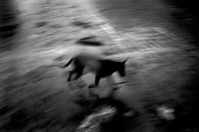 Paolo Pellegrin, 'Tsunami dog (Indonesia. Sumatra island. Banda Aceh. After the tsunami)', 2005