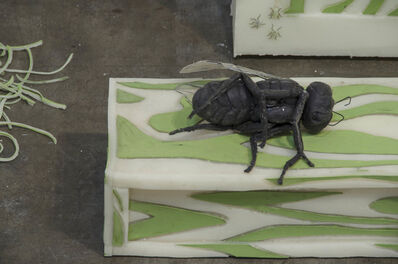 Jeanne Silverthorne, 'Big Fly on Crate', 2014