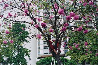 Brígida Baltar, 'Em uma árvore, em uma tarde', 2001