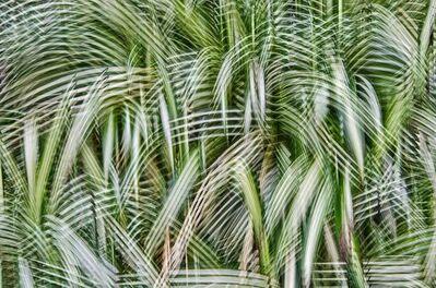 Atsushi Okabe, 'Artificial View_botanical_5', 2014