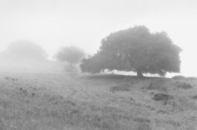 Chip Hooper, 'Three Oaks In Fog', 1993