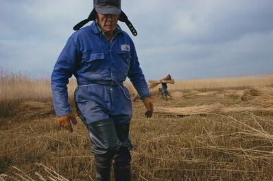 Justin Partyka, 'Reed Cutting, Suffolk', 2004