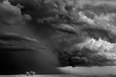 Mitch Dobrowner, 'Trees-Clouds, Texline Texas', 2009