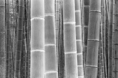 DaeSoo Kim, 'Colors Of The Bamboo'