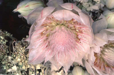 Nobuyoshi Araki, 'Flower Rondeau', 1997-2019