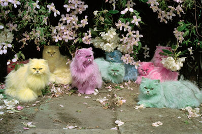 Tim Walker, 'Pastel Cats', 2000