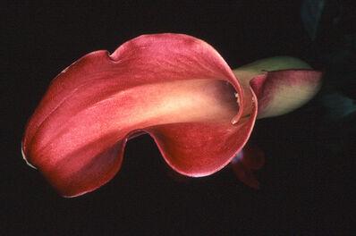 Nobuyoshi Araki, 'Flower Rondeau #021', 1997