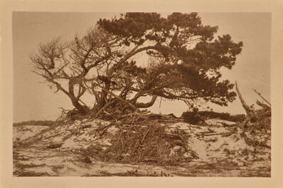 Arthur Wesley Dow, 'Cypress in Sand Dunes, Pacific Grove'