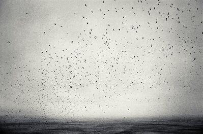 Joakim Eskildsen, 'The Puffins ', 1993