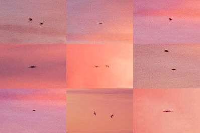 Penelope Umbrico, 'Suns from Sunsets from Flikr - Outtakes/ Birds (Pink)', 2018