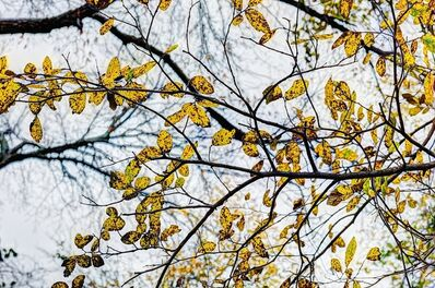 Luther Smith, 'Leaves, December 2014, Fort Worth, Texas', 2014