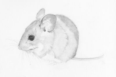 Heather Lancaster, 'Field Mouse', 2015
