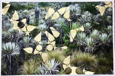 Mazenett Quiroga, 'Expanding pattern I (Paramo)', 2019