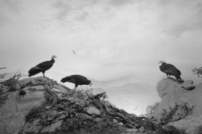 Hiroshi Sugimoto, 'California Condor', 1994