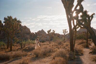 Gia Coppola, 'Untitled VIII (Joshua Tree)', 2017