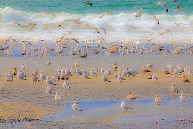Manss Aval, 'Seagull Still #1', 2014