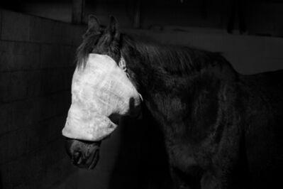 Tom Callemin, 'Horse', 2019