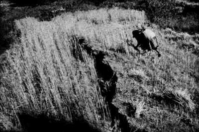 Matt Black, 'Cutting wheat from a cracked field. Santiago Mitlatongo, Mexico.', 2011