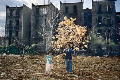 Meryl Meisler, 'Magnolia Tree', 1983