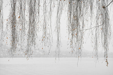 Laurie Lambrecht, 'Lake Trees No. 16', 2004