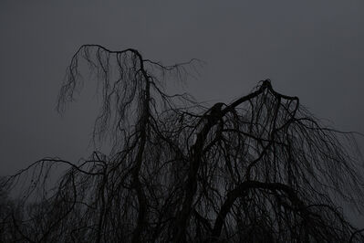 Wang Hsiang Lin, 'Metamorphosis 08', 2014