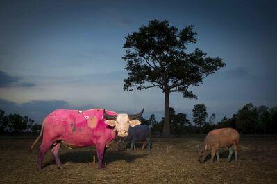 Maitree Siriboon, 'Pink Miro - Save Thai Bufalo series ', 2015
