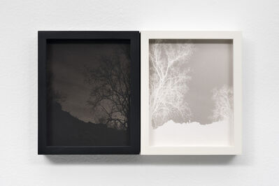Scott B. Davis, 'Ironwood Tree on Volcanic Soil', 2018