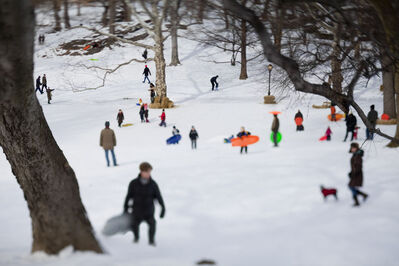 Susan Wides, 'Central Park [February 12-13, 2010]', 2010