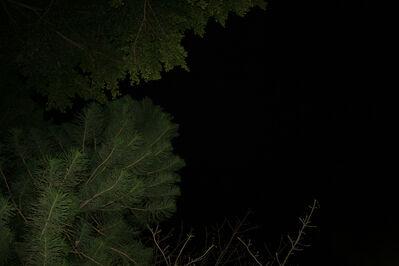 Wang Hsiang Lin, 'Metamorphosis 03', 2014