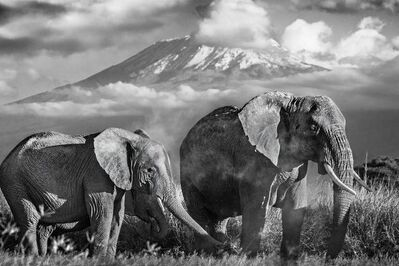 David Yarrow, 'Kilimanjaro', 2015