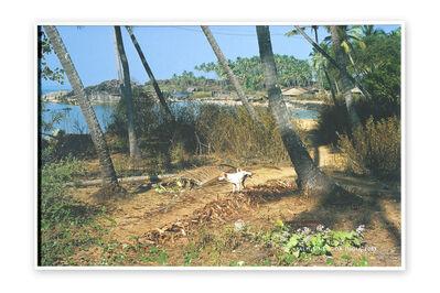 Richard Long, 'Palm Line, India', 2003