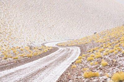 Maroesjka Lavigne, 'Yellow Brushes, Argentina', 2017