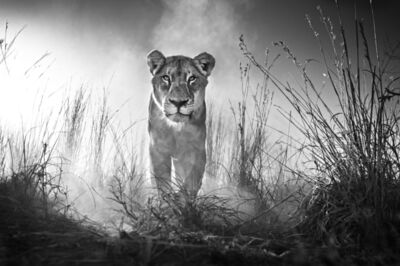 David Yarrow, 'Gladiator', 2015