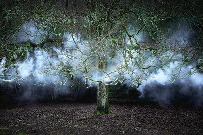 Ellie Davies, 'Between the Trees 11', 2014