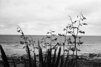 Amelie Jiang, 'Lunatic Grass', 2014