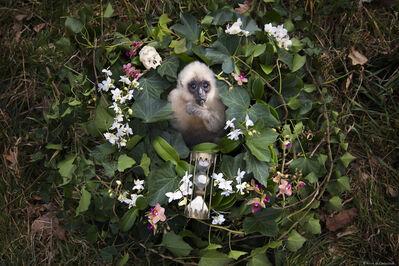 Anne De Carbuccia, 'Baby Gibbon', 2016