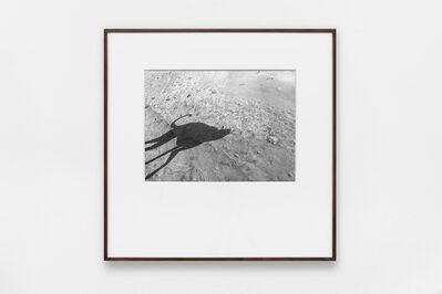 Miguel Calderón, 'Se llamaba sombra, 8', 2020