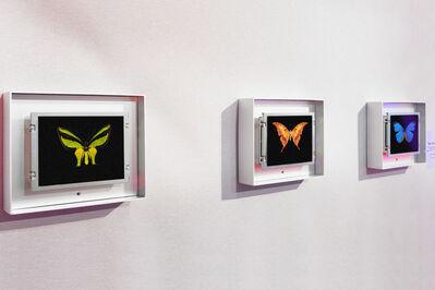 Dominic Harris, 'Baby Flutter', 2012