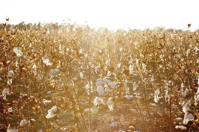 Gillian Laub, 'Cotton Fields', ca. 2014