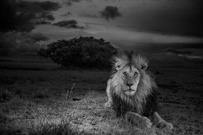 Michael Nichols, 'C-Boy, Serengeti National Park, Tanzania, 2012'