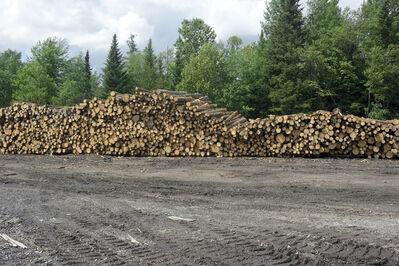 Susana Reisman, 'Log Pile', 2013